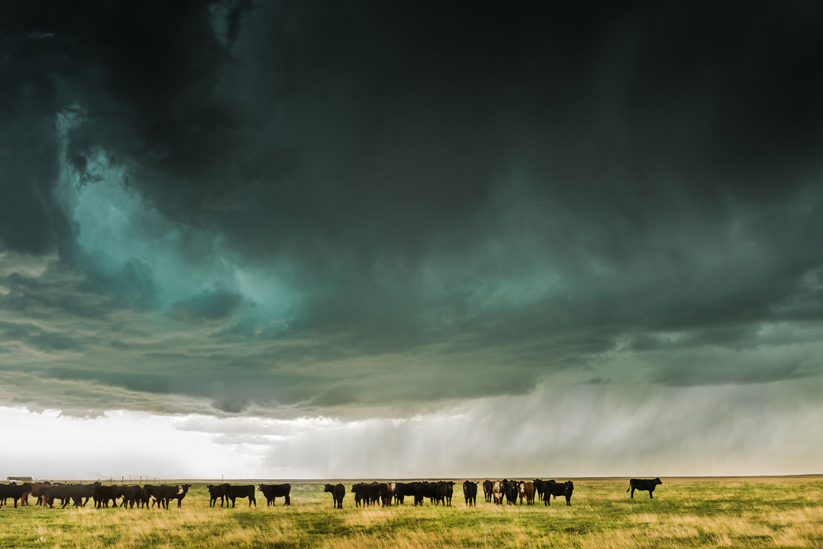 Hail-filled Supercell with Cattle. Limon, Colorado – Eric Meola